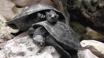 Hochzeitsantrag im Zoo machen