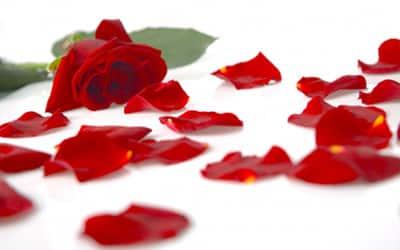 Rosenblätter kaufen (hier klicken)